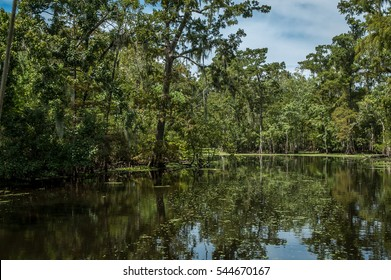 Bayou on a hot summer noon, near New Orleans, Louisiana.