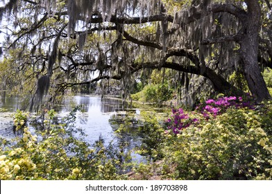 Bayou in the spring
