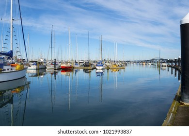 Bayswater Boats Marina Auckland New Zealand; Also Populer as a Fishing Spot in Aucland