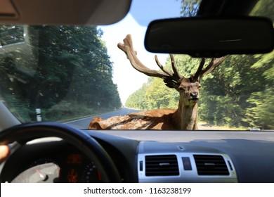 Be aware of deer crossing!