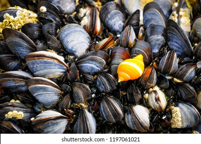 Be different concept with orange shell among black shells