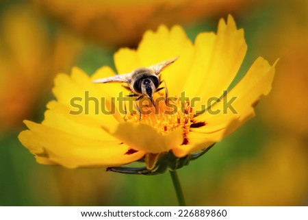 Be on a beautiful yellow flower picking nectar.