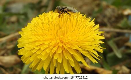 Bea flora pics
