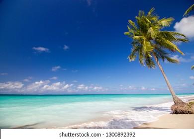 Beach in Alagoas - Brazil