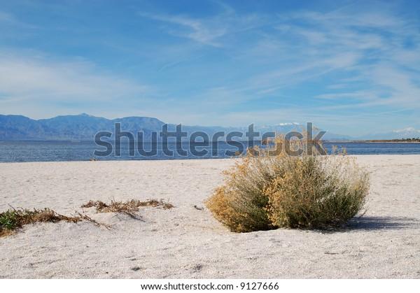 Beach along lake; Salton Sea; Bombay Beach, California