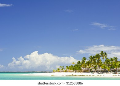 A beach in Aruba with Palm Trees.