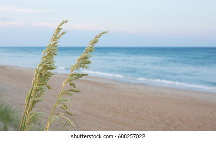 Beach in the background with green plants in the foreground.  Shallow depth of field.