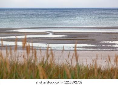 Beach of the Baltic Sea
