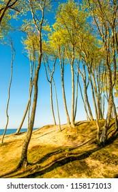 beach of the Baltic Sea in Orzechowo, Poland