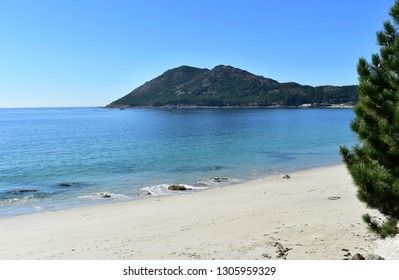 Beach in a bay with pine tree and hill with trees. Bright sand and blue sea, clear sky, sunny day. Galicia, Spain.