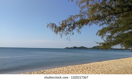 Beach in a bay with pine tree and hill with trees. Bright sand and blue sea, clear sky, sunny day