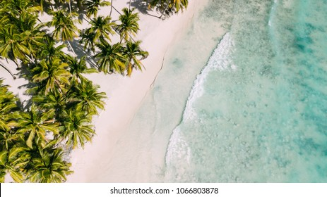 Beach with beautiful coastline. Palm trees and caribbean sea. Color water is turquoise, white sand and green palm trees. Little foaming waves. East National Park isla Saona, Dominican Republic