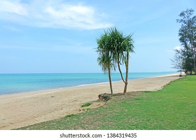 Beach : Beautiful seascape of Bang Lud beach, Khao Lak, Phang Nga province, Thailand. Tahitian screwpine tree on the beach, coastal lowland the edge of ocean.