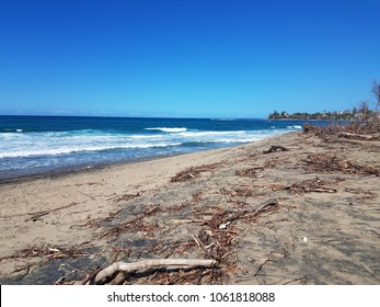 beach with brown dead plants in Hatillo Puerto Rico after hurricanes Irma and Maria