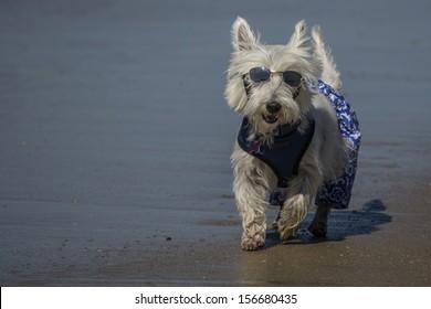 Beach Bum Dog