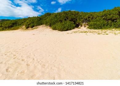Beach and bushes of Amami Oshima, Kagoshima Prefecture, Japan