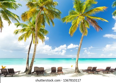 Beach calm scene with sunbeds under coconut palms close to Caribbean sea. Tropical paradise with chaise lounges on white sand, beautiful travel card background