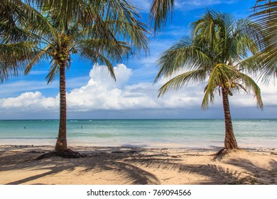 Beach in the Caribbean with coconut trees.