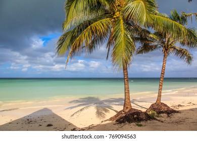 Beach in the Caribbean with coconut trees. Cayo Jutias, Cuba
