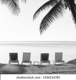 Beach chairs in sand with tropical palm trees as vintage background in stunning black and white