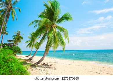 beach and coconut palm tree