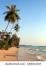 beach with coconut palms
