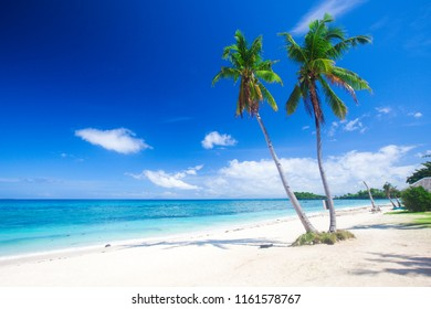 beach and coconut plm tree