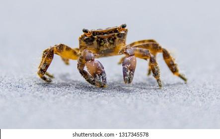 a beach crab runs along the shore of a sea