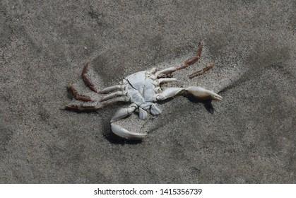 At the Beach - Dead cancer