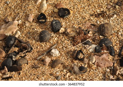 Beach Debris 2 - Kukui nuts, shells, coral, and more are scattered along the high tide line.