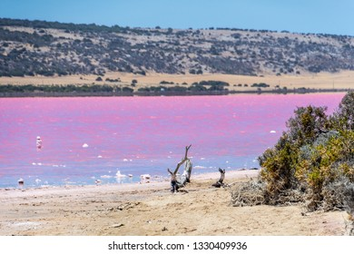 Beach with drift wood of the Pink Lake next to Gregory in West Australia