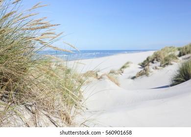 Beach and dune grass.