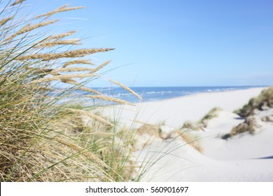 Beach and dune grass.
