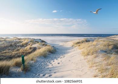 Beach, dunes and north sea