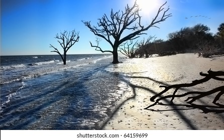 Beach Erosion: Oak trees in the surf due to changing tide levels
