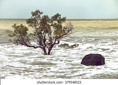 beach erosion, trees in the surf due to changing tide levels