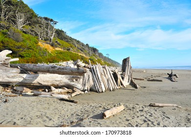 Beach First in Olympic National Park, Washington State, USA