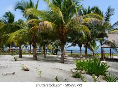 beach garden Holiday summer Mexico Palms beach house