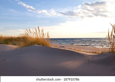 Beach Grass on Shoreline. Gold hued dune grass reflects the late day sun on the Lake Michigan shoreline