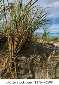 Beach grass, sand and sky close up. Nature's perfect color palette.