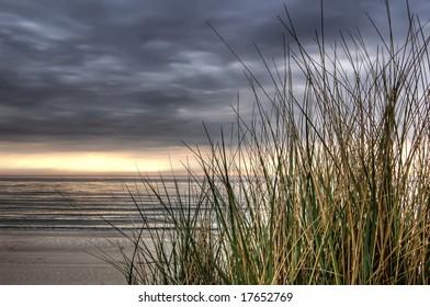 beach grass at sunset, calm before the storm