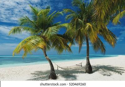 Beach Hammock between two beautiful palm trees