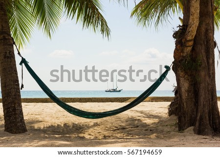 Beach Hammock Hanging Thick Tree Palm Stock Photo Edit Now