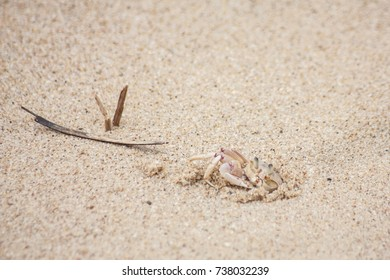 Beach holiday sandy crab