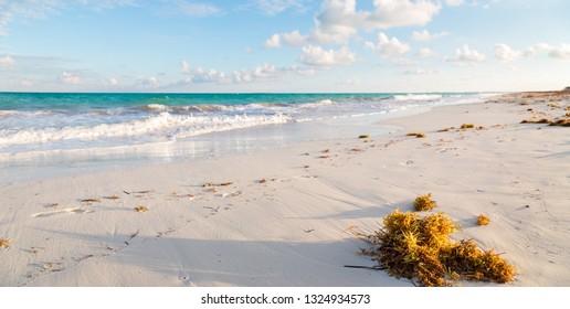 The beach at Isla Blanca near Cancun, QR, Mexico at sunset.