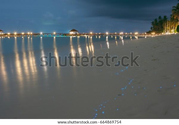 Beach Maldives Bioluminescence Illumination Plankton