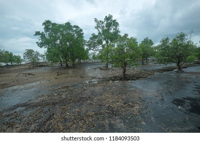 Beach with mangrove landscape in Satun, Thailand.