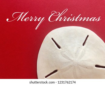 Beach Merry Christmas concept. Sand Dollar against a red background.