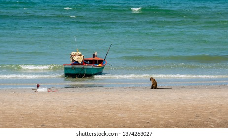 Beach with monkey and a boat