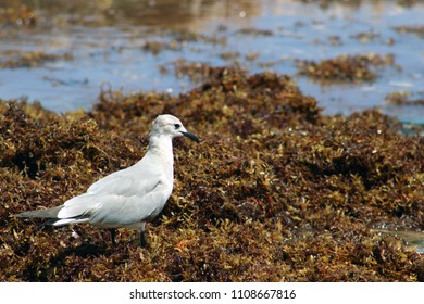 In the beach my seagull